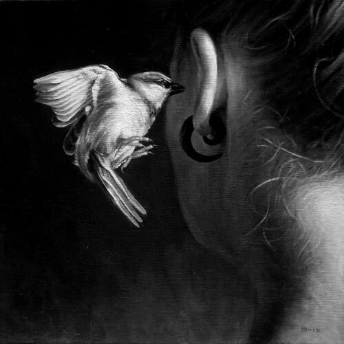 2948cc21af45a21405e44308171e3f39--little-birds-the-voice